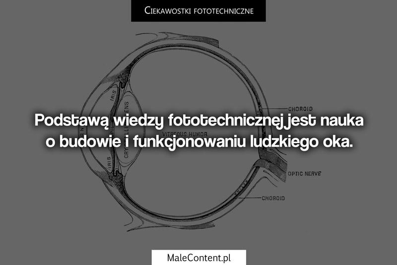 Podstawą wiedzy fototechnicznej jest nauka o budowie i funkcjonowaniu ludzkiego oka.