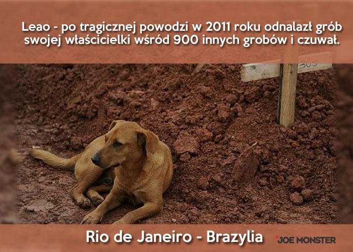 Dlaczego psy nie przestają czekać na swoich zmarłych właścicieli?